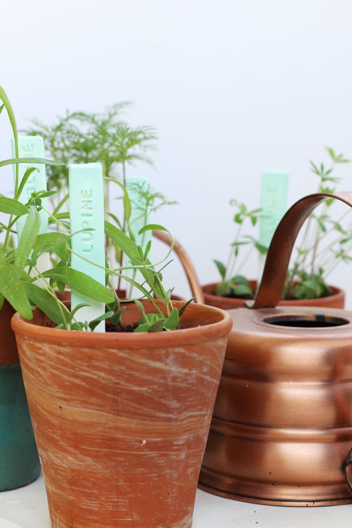Pflanzenbeschriftung für Balkonblumen // provinzkindchen.com