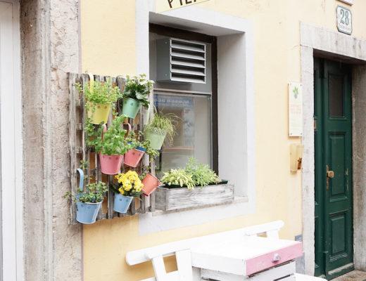 Graz Tipp: Pierogi Graz Neutorgasse