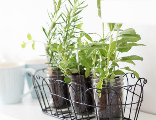 DIY Kräutergarten für die Küche im Lieblingsglas