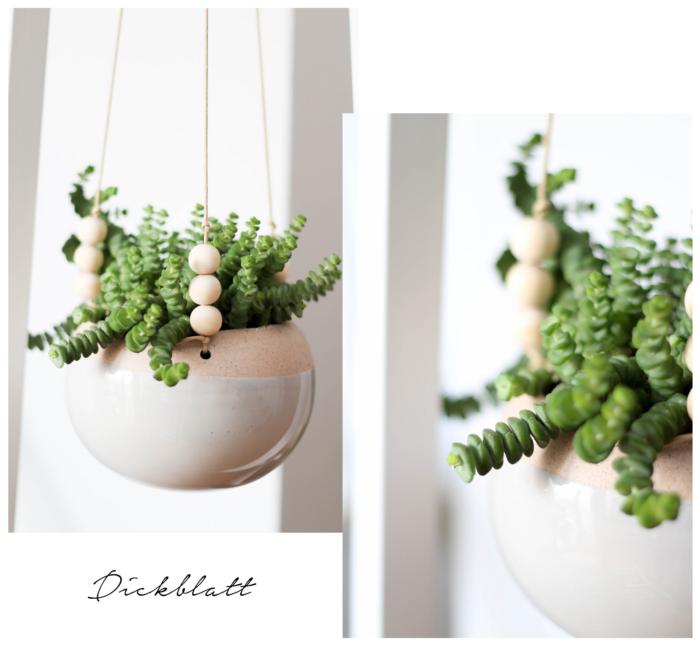 5 pflegeleichte Zimmerpflanzen und meine neuen Blumentöpfe aus der Zalando Lounge: Dickblatt