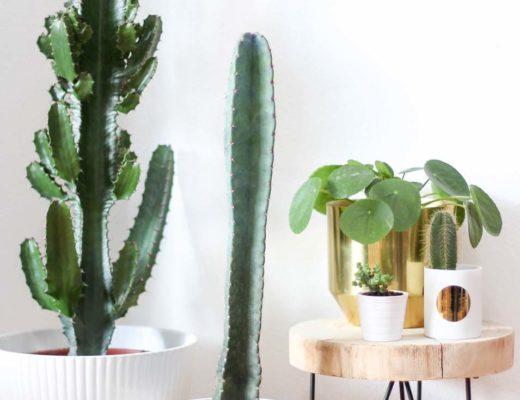 5 pflegeleichte Zimmerpflanzen und meine neuen Blumentöpfe aus der Zalando Lounge