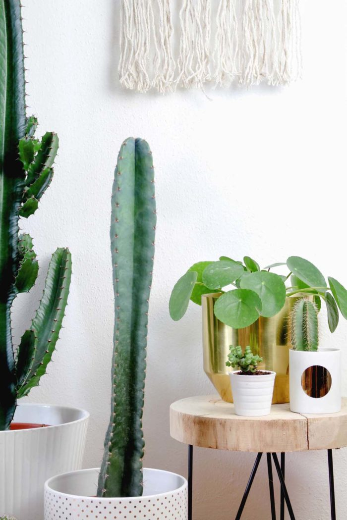 5 pflegeleichte zimmerpflanzen und meine neuen blument pfe. Black Bedroom Furniture Sets. Home Design Ideas