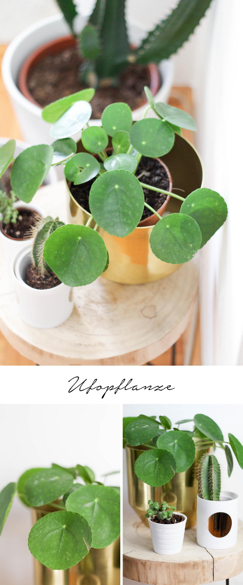5 pflegeleichte Zimmerpflanzen und meine neuen Blumentöpfe aus der Zalando Lounge: Ufopflanze