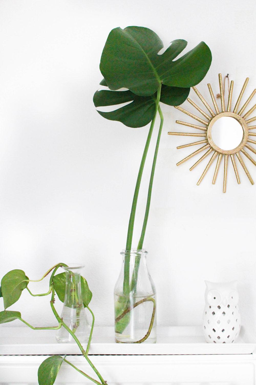 So einfach kannst du deine Zimmerpflanzen vermehren