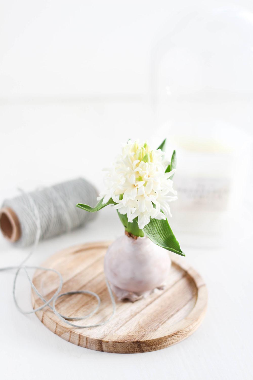 DIY Frühlingsdeko: Blumenzwiebel in Wachs