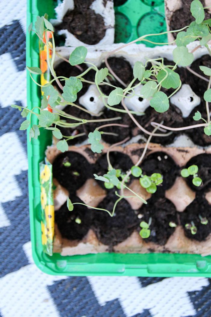 Pflanzen ziehen im Eierkarton - So einfach geht's